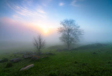 Lost in the morning by xrust