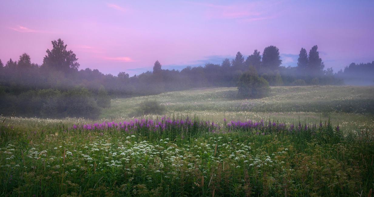 Midsummer dawn's dream by xrust