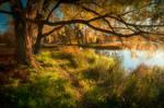Golden autumn path