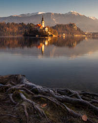 Bled roots
