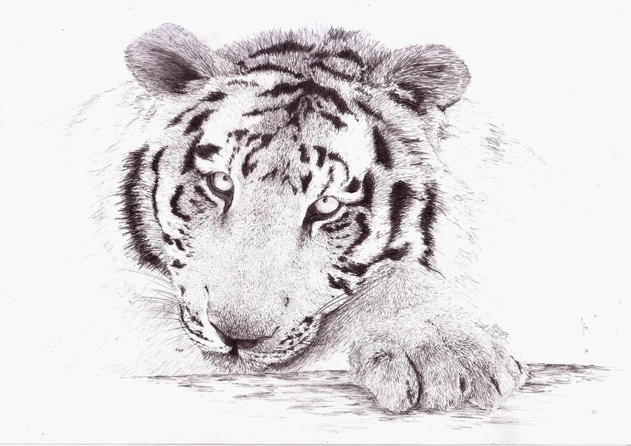 Commission - Tiger by DanieleGrigo