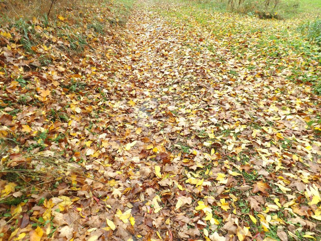 Leaves by FluffyFaithy