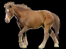 Horse Pre-Cut #2 by Satrumm