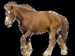 Horse Pre-Cut #2