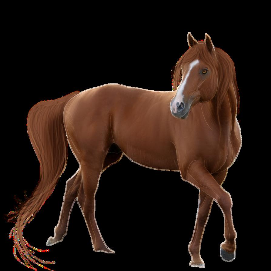 Horse Cut