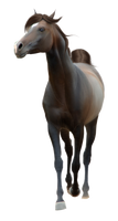 Horse Pre-Cut #5