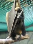 AthenaStock::Upsidedown Bat