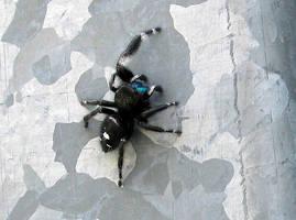 AthenaStock::Spider3