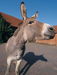 Donkey Eyeballs Photographer