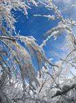AthenaStock: Snowy Branches 8