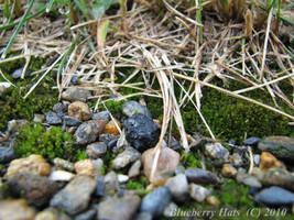 Tumblemoss by BlueberryHats