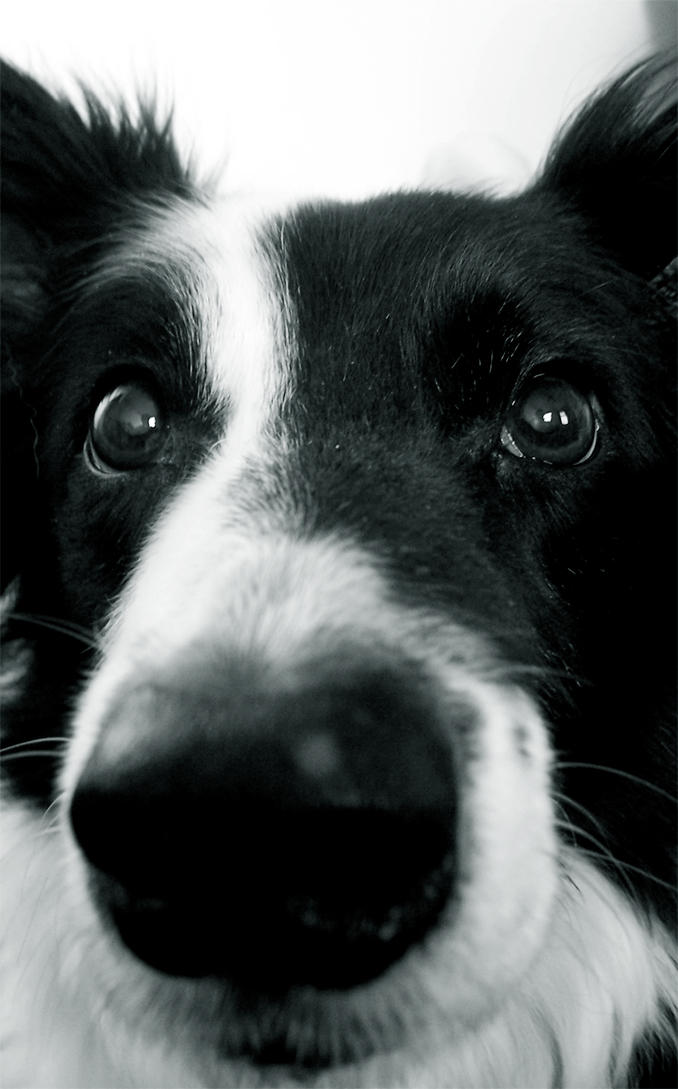 Dog by nic-k