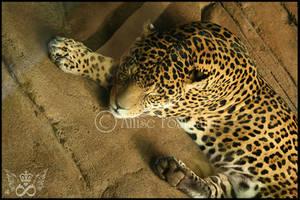 Jaguar by gogirlanime