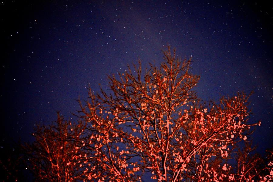 A Fall Night by hothorsechik