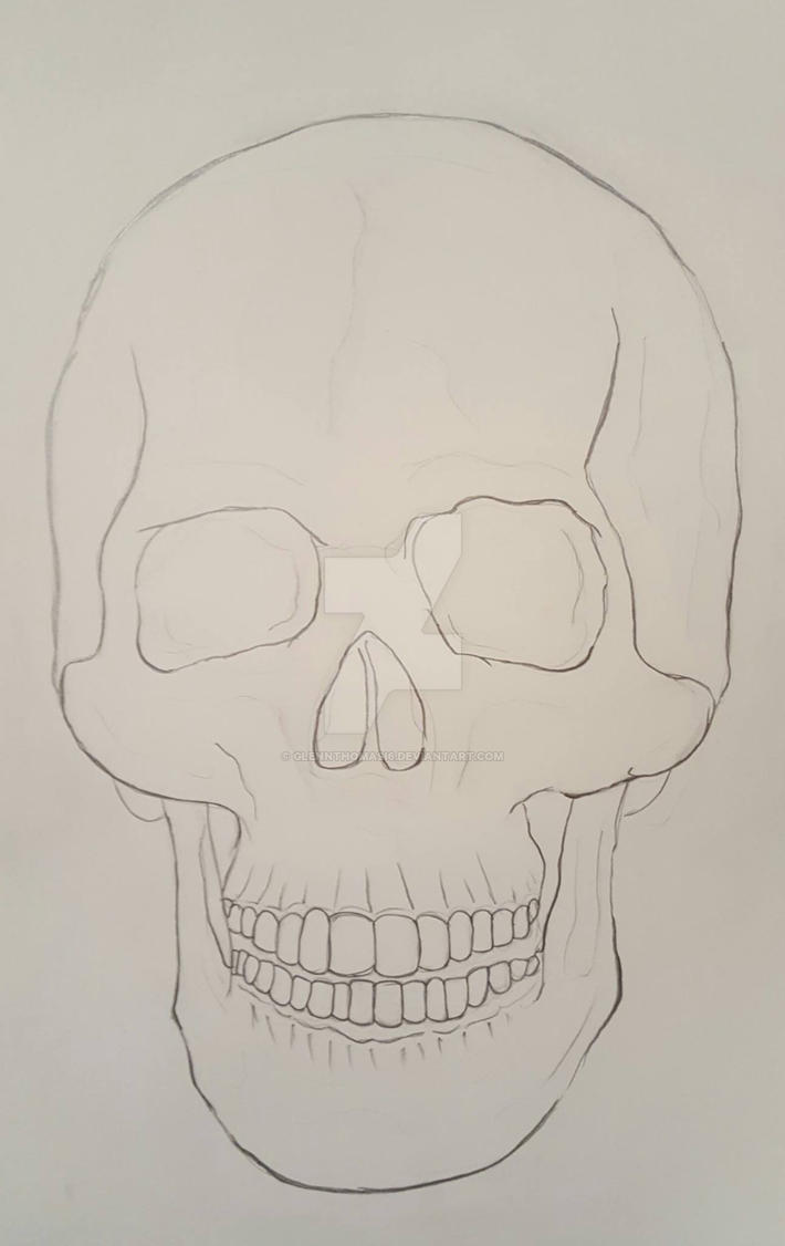 Skull Study Frontal View: Contour Drawing by GlennThomasi6