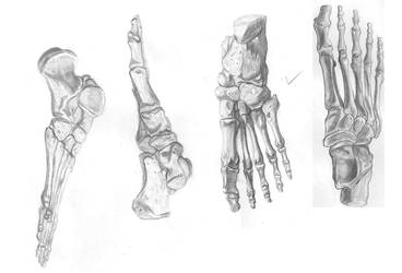 Feet Study by RaczTamas