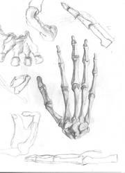 Hands Study by RaczTamas