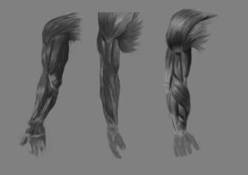 Arm Anatomy 1 by RaczTamas