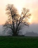 Morning fog by vanbrunt