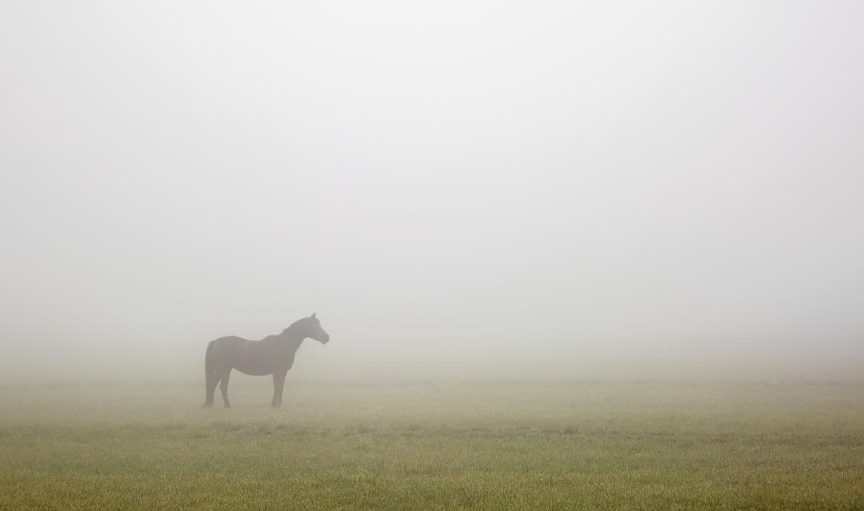morning fog by eDDie-TK