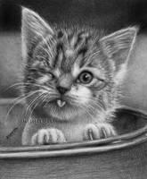 Kitty by waderra