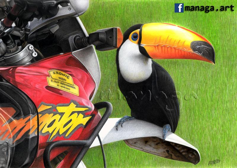 Honda Dominator and Tocan by waderra