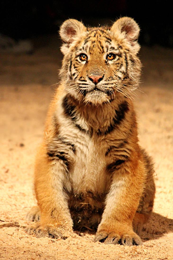 18 Super Cute Diy Valentines Crafts For Kids: Super Cute Tiger Cub By Suzie18 On DeviantArt