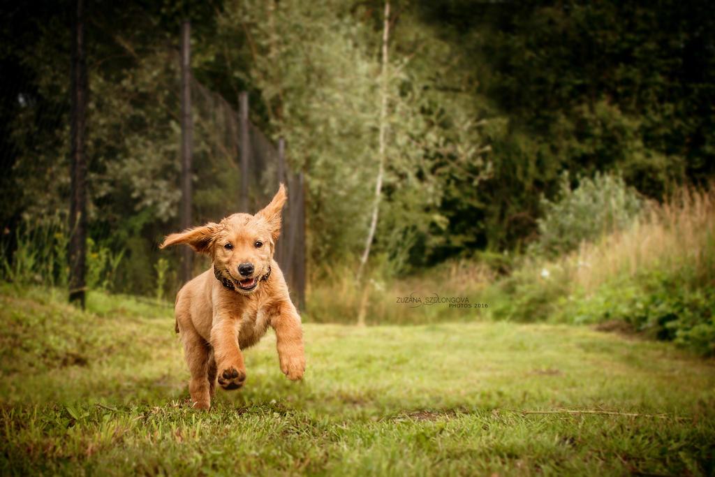 Puppy Attack by Suzie18