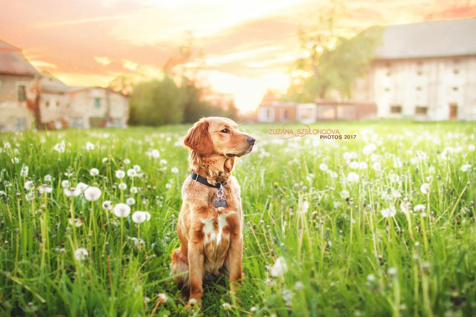 Enjoy spring by Suzie18