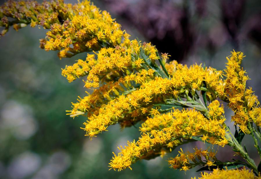Kentucky State Flower by LisaAnn1968 ...