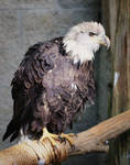 Ruffle Me Feathers by LisaAnn1968