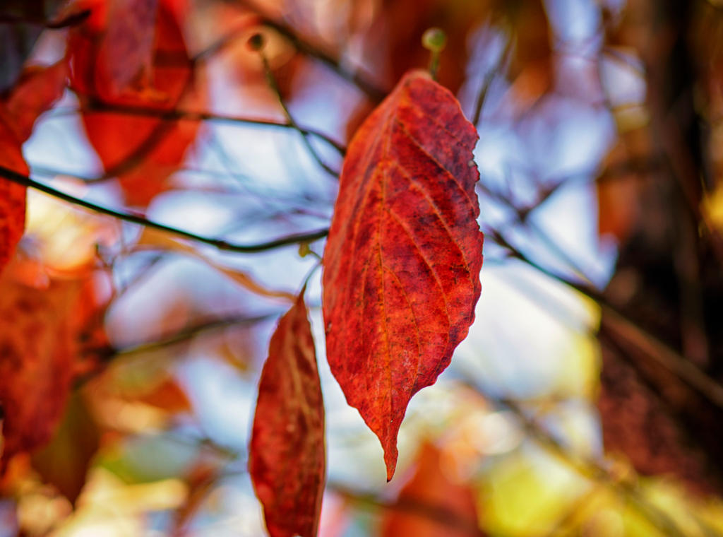 My Favorite Color Autumn by LisaAnn1968