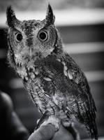 Petite Owl by LisaAnn1968