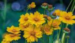 Joy of Yellow