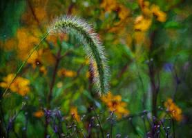 Meadow Dancer