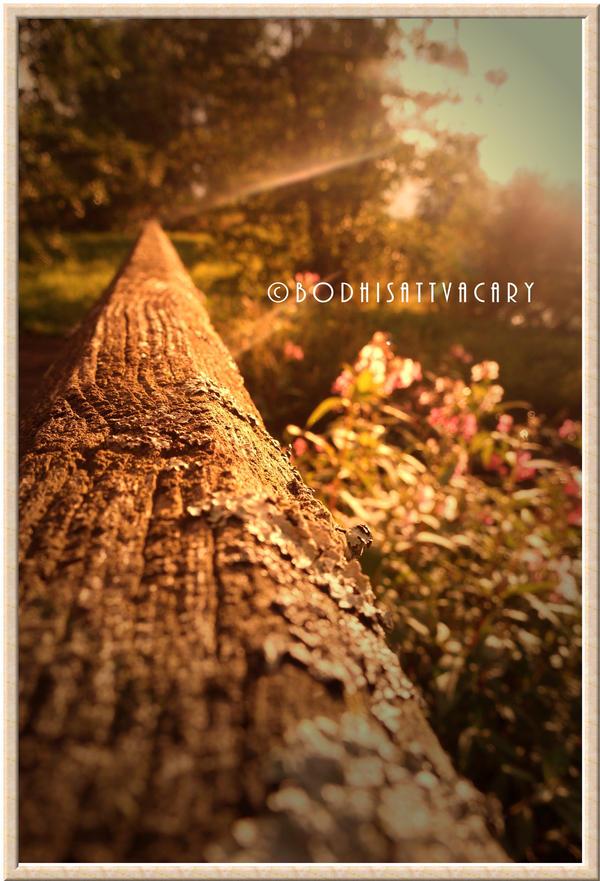it's a shiny shiny morning II by Bodhisattvacary
