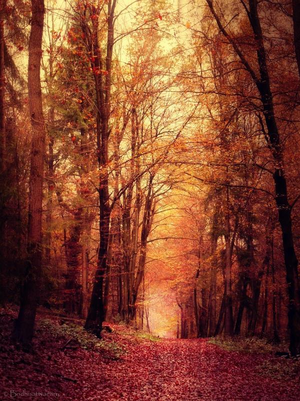 the woodlanddays XXIX