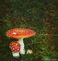 the mushroomdays I