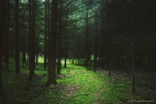 the woodlanddays L