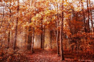 the woodlanddays LI