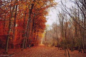 the woodlanddays LIII