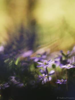 the flower days XIX