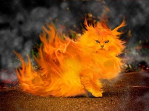 Via414's Profile Picture