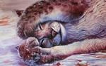 Sleepy Lynx