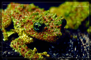 Mossy Frog by theperfectlestat