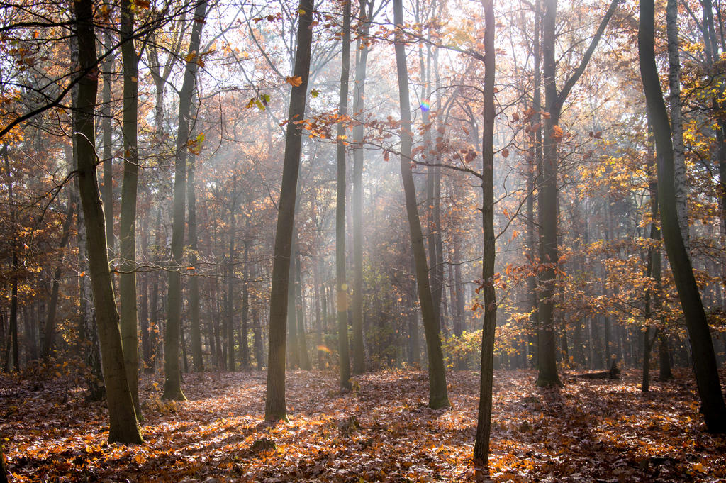 Sunrays in the forest by unikatdesign