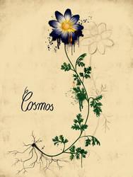 Cosmos by unikatdesign