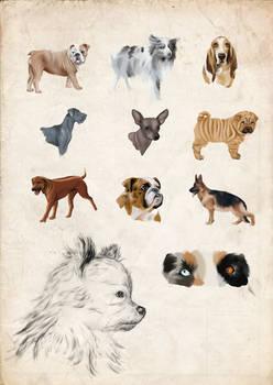 Hunde - Dogs