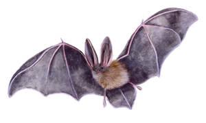 Fledermaus by unikatdesign