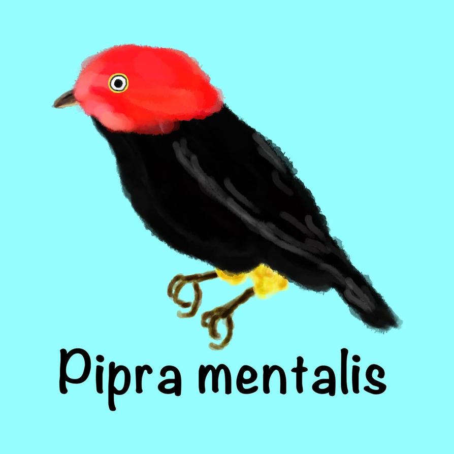 Pipra mentalis by kodama-alternative